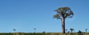 activites-publiques-rc-md-taille-M_baobab